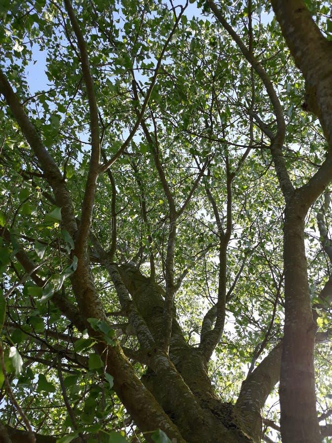 Однако деревья стоковое изображение