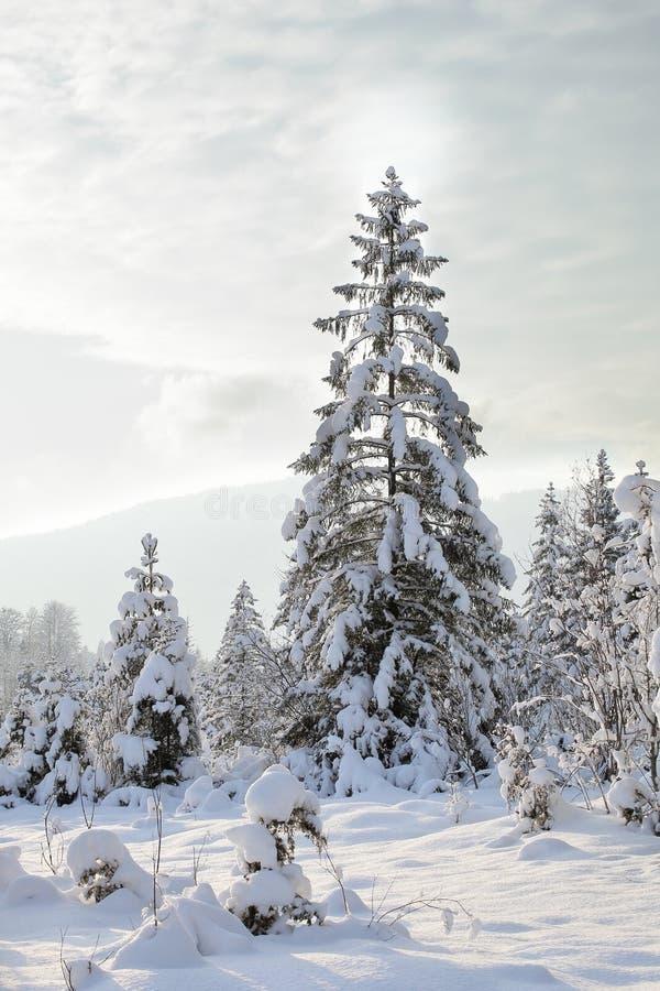 Одна большая снежная рождественская елка стоковые изображения