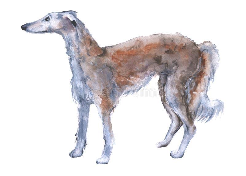 Одна борзая русского собаки белизна изолированная предпосылкой иллюстрация штока