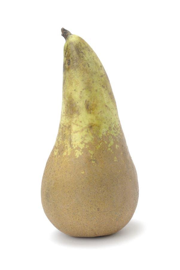 Одна груша, сырцовый плод стоковое фото