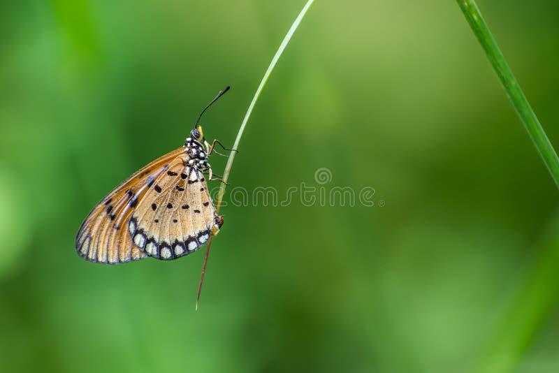Одна красивая бабочка стоковые фото
