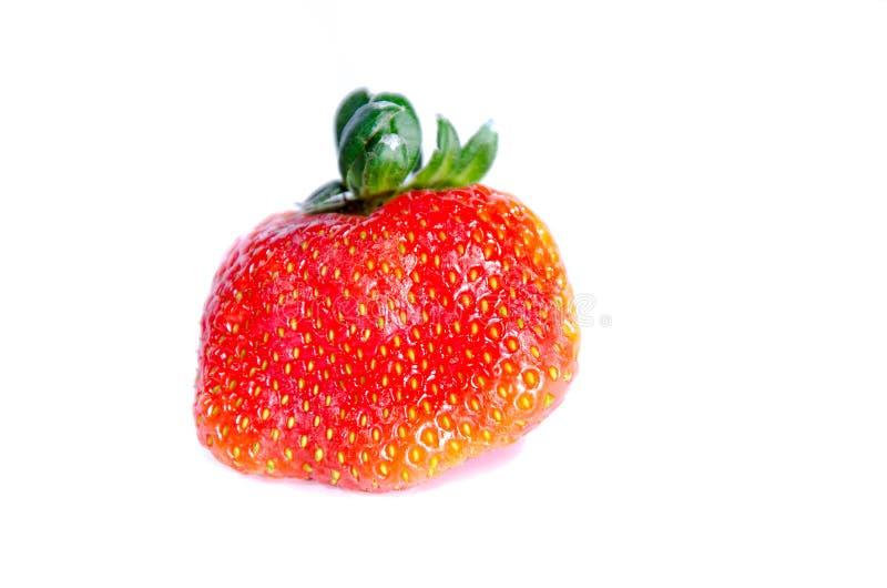 Одна красная свежая сладкая большая клубника стоковые изображения rf
