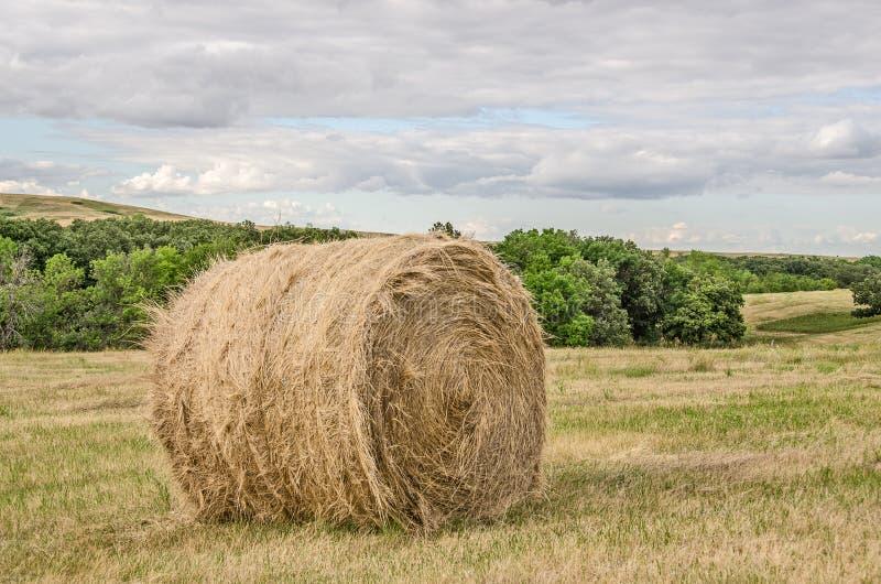 Одна круглая связка сена стоковая фотография rf