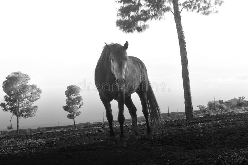 Одна лошадь на деревне стоковое изображение
