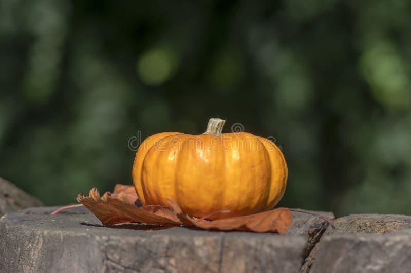 Одна тыква мандарина декоративная на деревянном пне, ярком оранжевом цвете, сезоне осени стоковое изображение