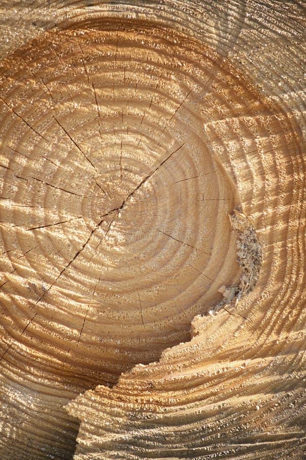 однолетние перекрестные старые кольца распределяют вал стоковое изображение rf