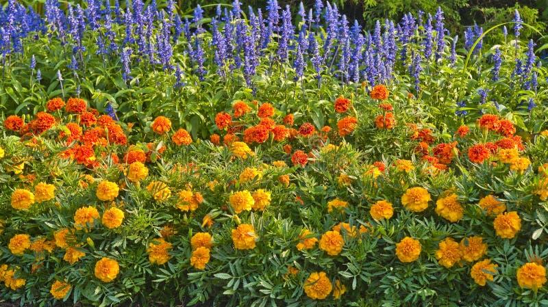 однолетние цветки стоковое изображение