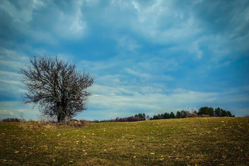 одно дерево без листьев на поле фермы весны против голубого облачного неба стоковая фотография