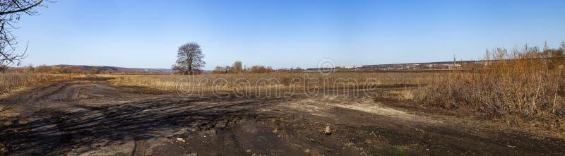 Одно дерево в поле и дороге стоковое фото rf