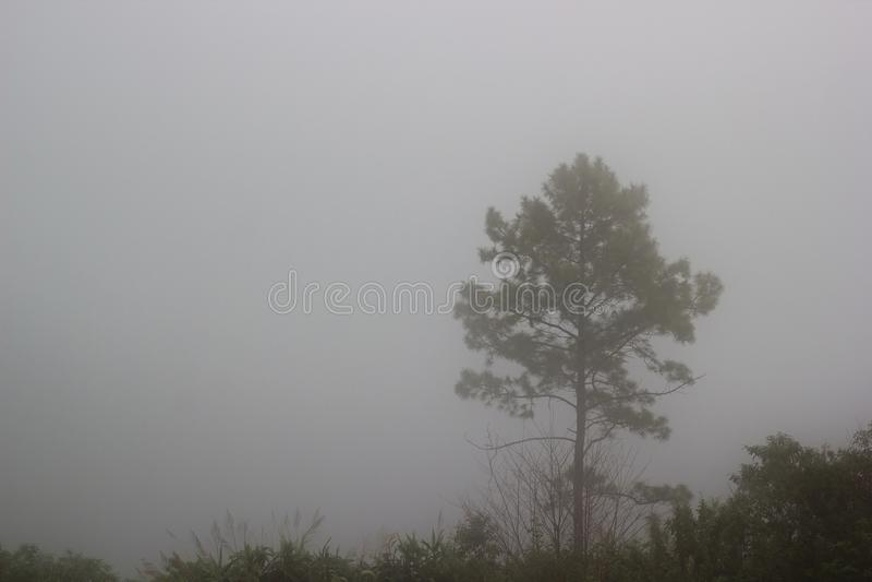 Одно дерево стоя самостоятельно в туманном Предпосылка тайны стоковые фото