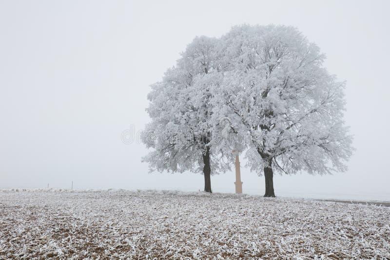 Одно, который замерли дерево в снежных поле и тумане стоковая фотография
