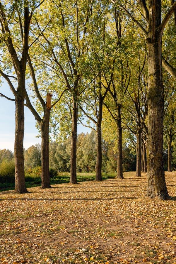 Одно сломленное дерево между другими совершенными деревьями стоя на grou стоковая фотография