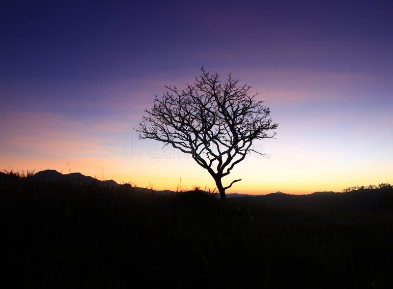 Одно сухое дерево на горе стоковая фотография rf