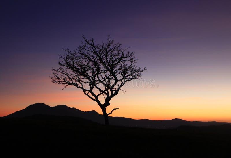 Одно сухое дерево на горе стоковые изображения rf