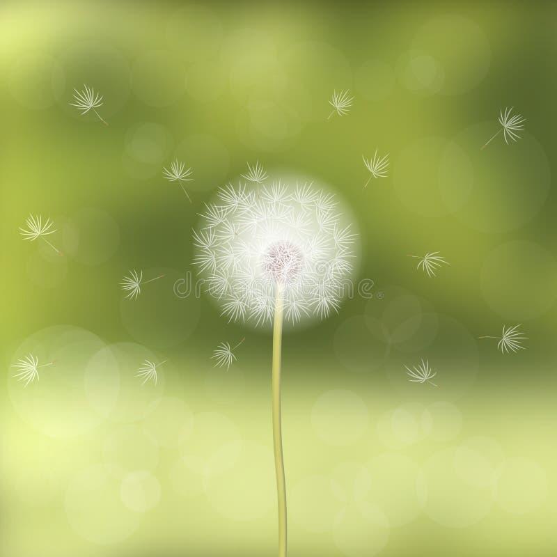 Одуванчик дунутый ветром, против предпосылки зеленого цвета запачкал возникновение леса естественное 9 тюльпанов весны настроения бесплатная иллюстрация