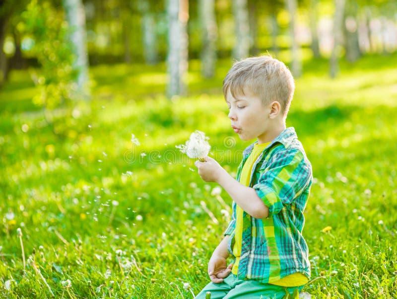 Одуванчик мальчика дуя на зеленой траве стоковые фотографии rf