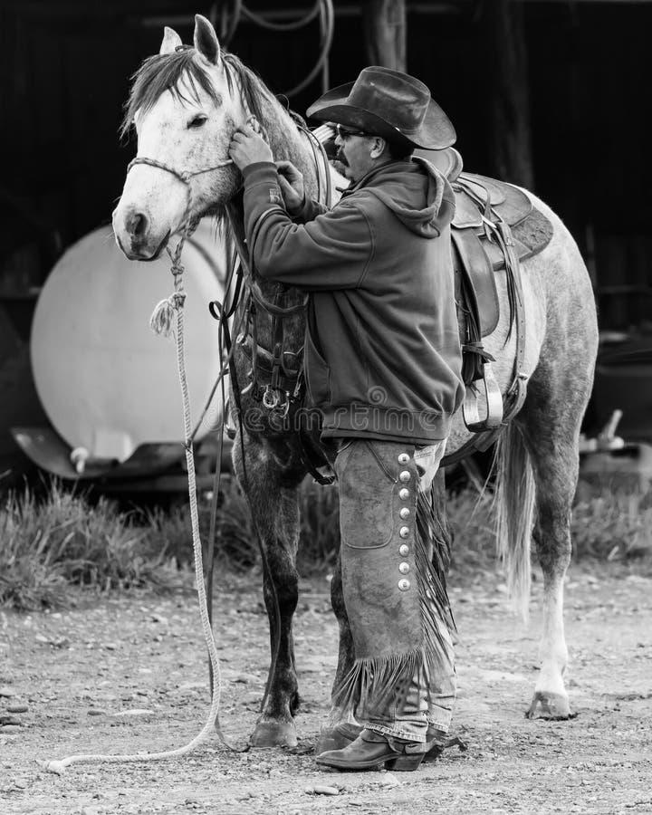 22-ОЕ АПРЕЛЯ 2017, RIDGWAY КОЛОРАДО: Лошадь седловин ковбоя на Centennial ранчо, Ridgway, Колорадо - скотоводческом ранче имеемом стоковая фотография