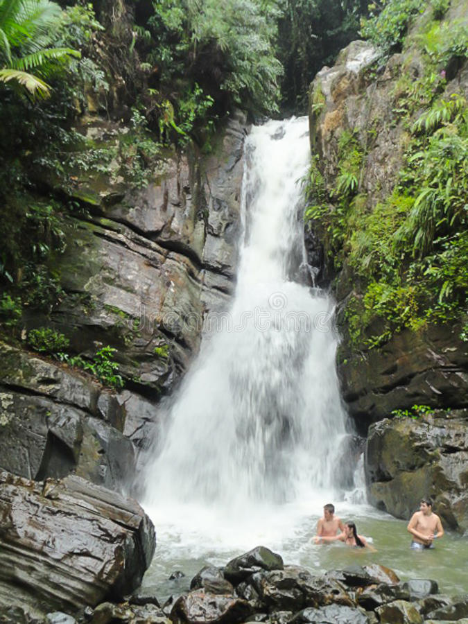 16-ое февраля 2015: Тропический лес El Yunque национальный, Пуэрто-Рико, Соединенные Штаты стоковое фото rf