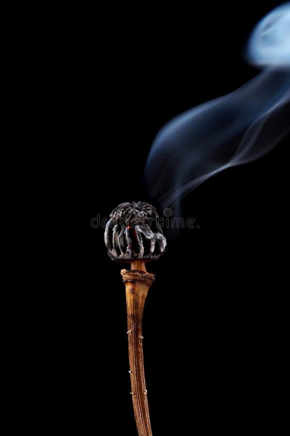 ожог возглавляет вне мак стоковые изображения