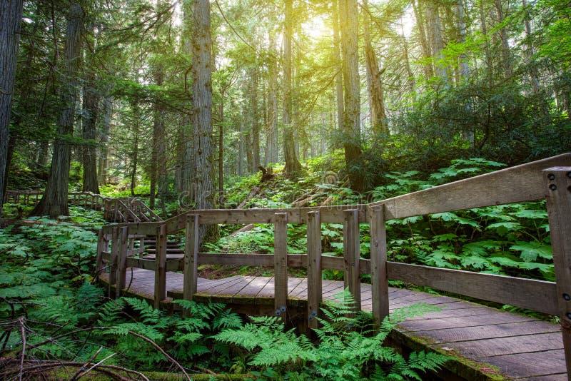 дождевый лес воздержательный стоковые фотографии rf