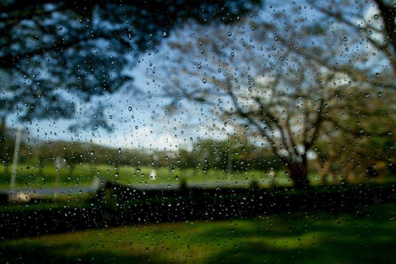 дождь стоковые фотографии rf