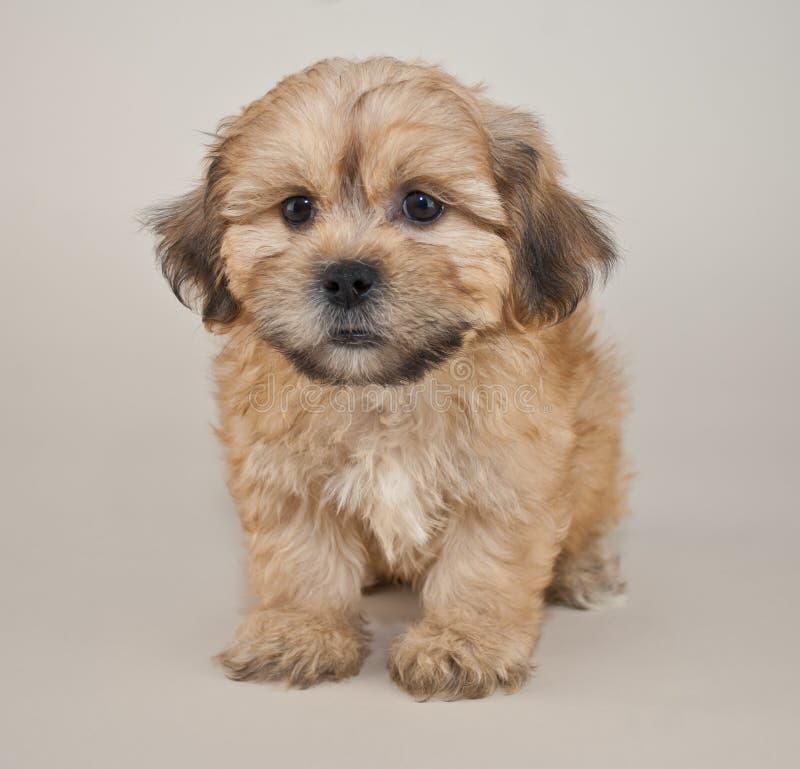 Озадаченный щенок стоковое фото rf