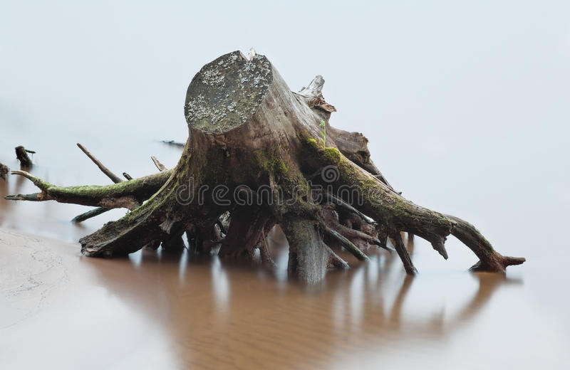 Озадачивайте и корень мертвого дерева в реке на пляже в нерезкости стоковое изображение