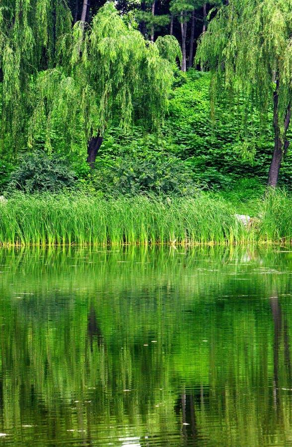 озера стоковые фото