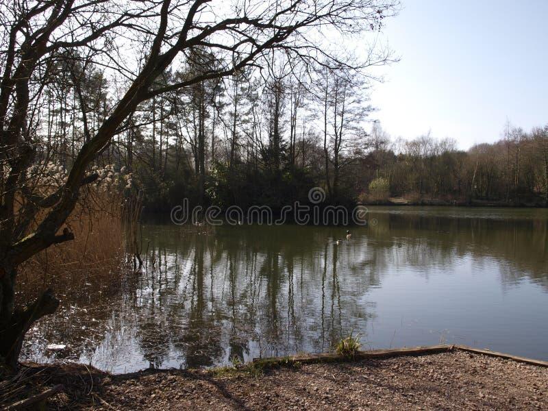 Озера Swanwick в Хемпшире Англии стоковые фотографии rf