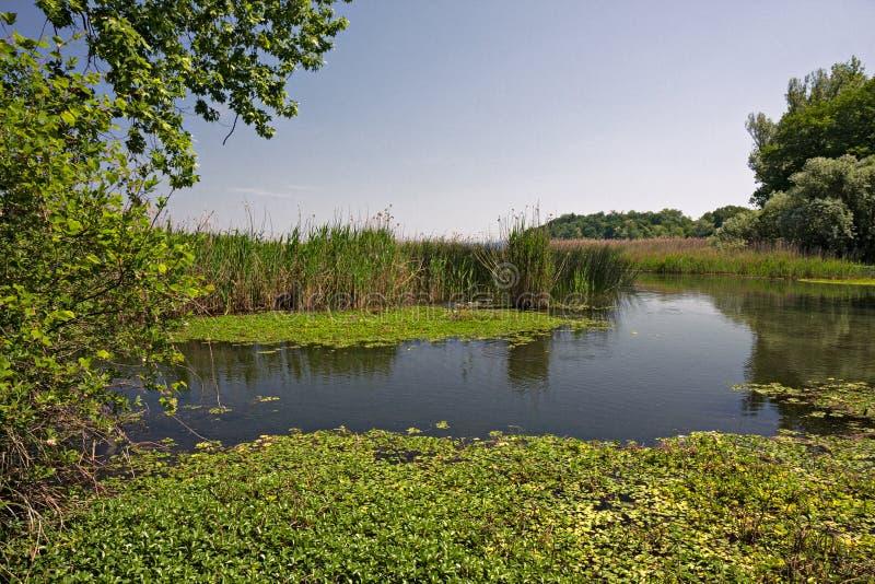озером между кустами и тростниками стоковые фото