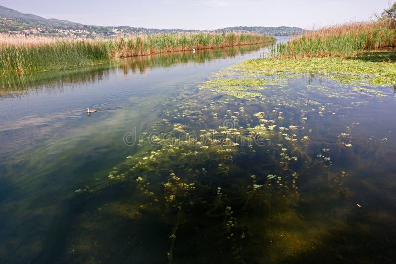 озером между кустами и тростниками стоковая фотография