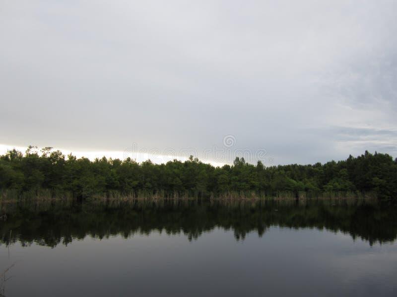 Озеро болото с небом вечера стоковое фото rf