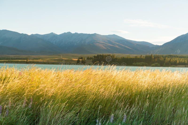 Озеро воды Tekapo с длинным фронтом травы стоковое фото