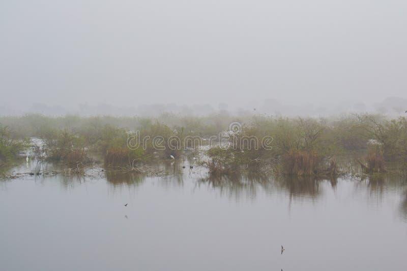 Озеро во время туманного утра зимы в Индии стоковое фото rf