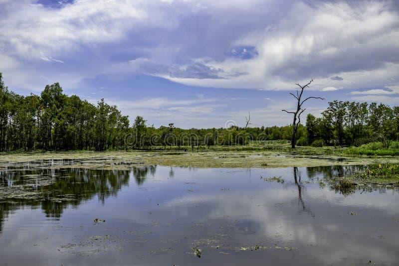 Озеро вяз на парке штата загиба Brazos стоковая фотография rf