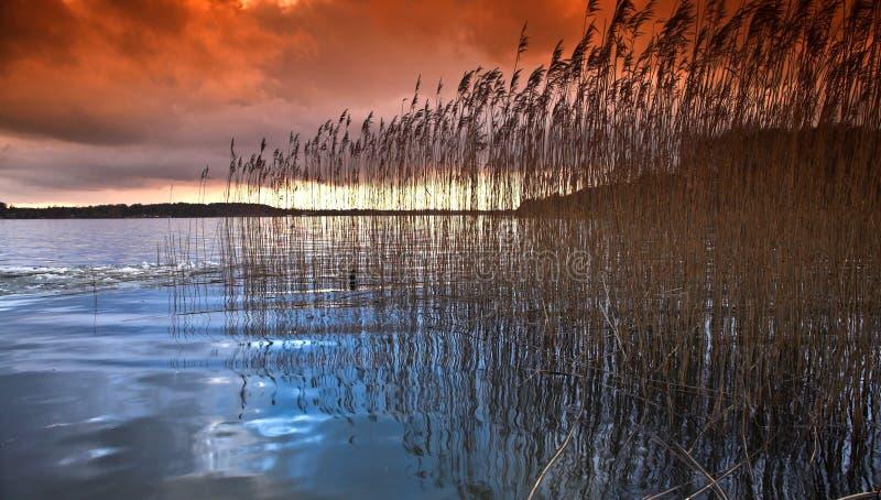 Озеро в Дании в зиме стоковое фото rf