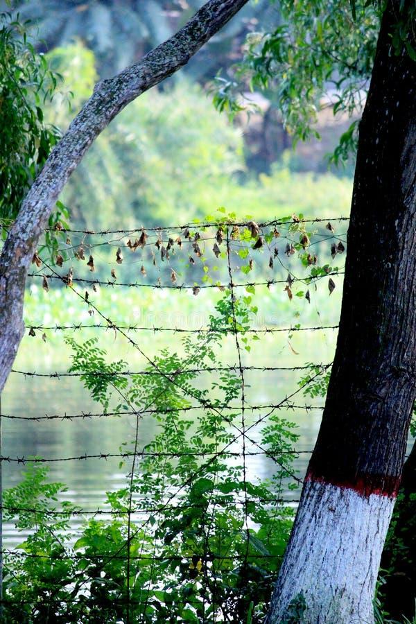 Озеро в лесе мангровы Sundarban стоковые фотографии rf