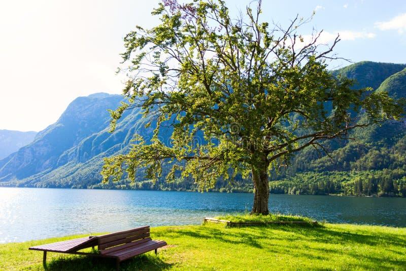 Озеро в лете - озеро Bohinj гор стоковое изображение rf