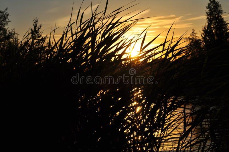 Озеро в заходе солнца стоковое фото rf