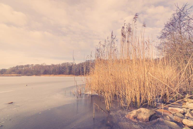 Озеро в зиме с тростниками стоковые изображения