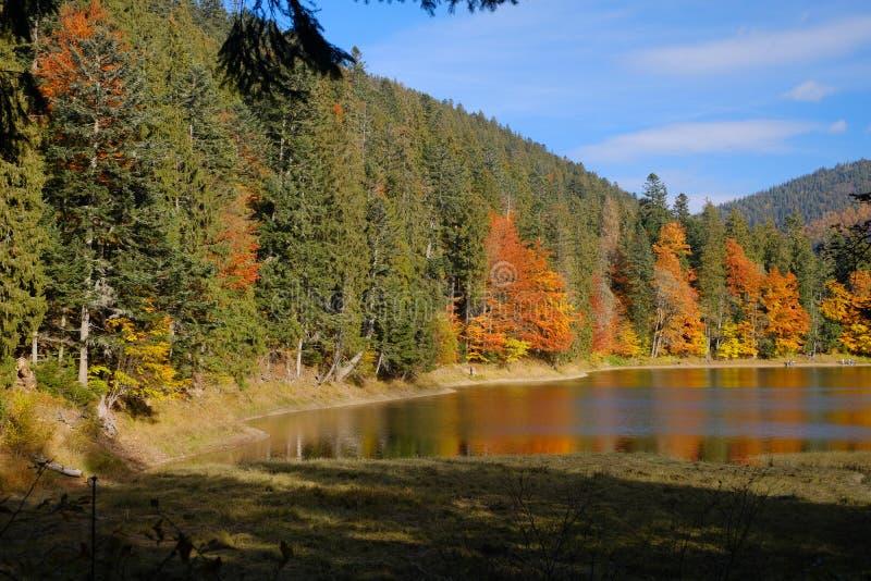 Озеро в прикарпатских горах, Украина горы Synevyr стоковое изображение