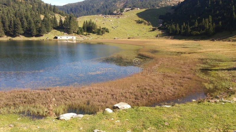 Download Озеро в природе стоковое фото. изображение насчитывающей пуща - 81802558