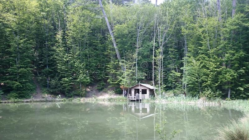 Озеро в пуще стоковое изображение rf