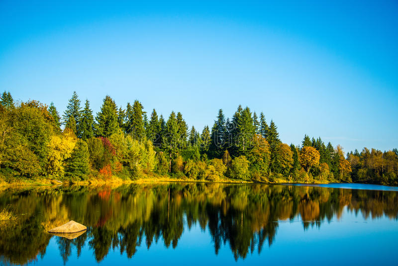 Озеро в древесинах стоковая фотография rf