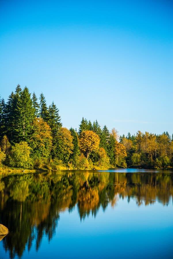 Озеро в древесинах стоковое фото