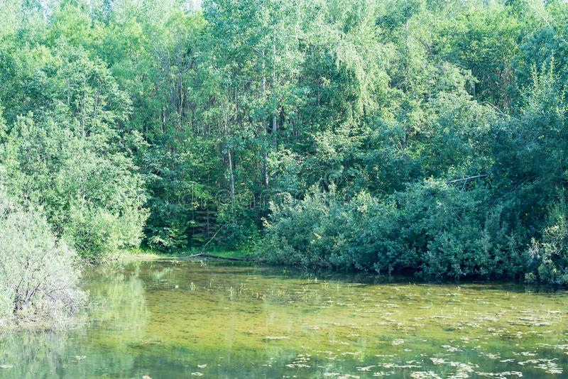 Озеро в труднопроходимом лесе, место для удить, пруд в древесинах стоковые фото
