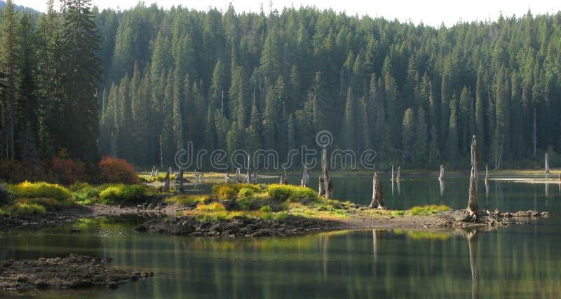 Озеро гусын - национальный лес Wa - Gifford Pinchot стоковое фото