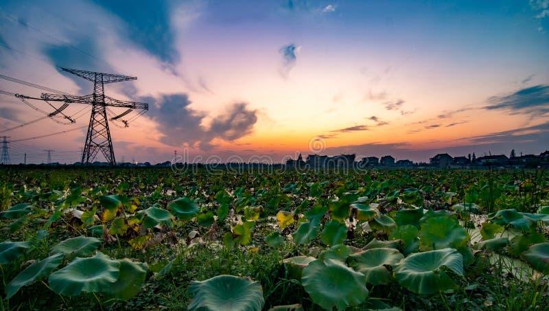 Озеро деревни Китая Шанхая малое стоковые изображения