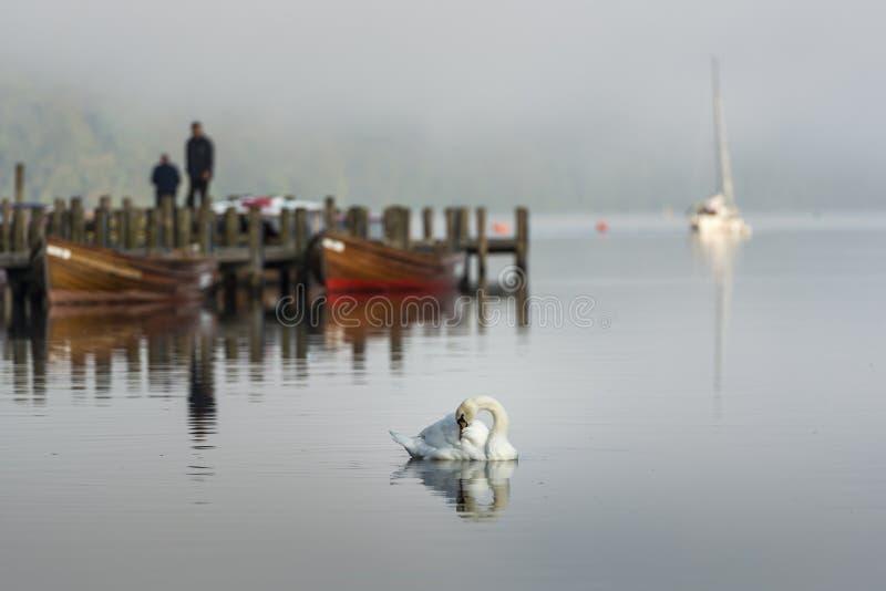 Озеро лебед стоковое фото