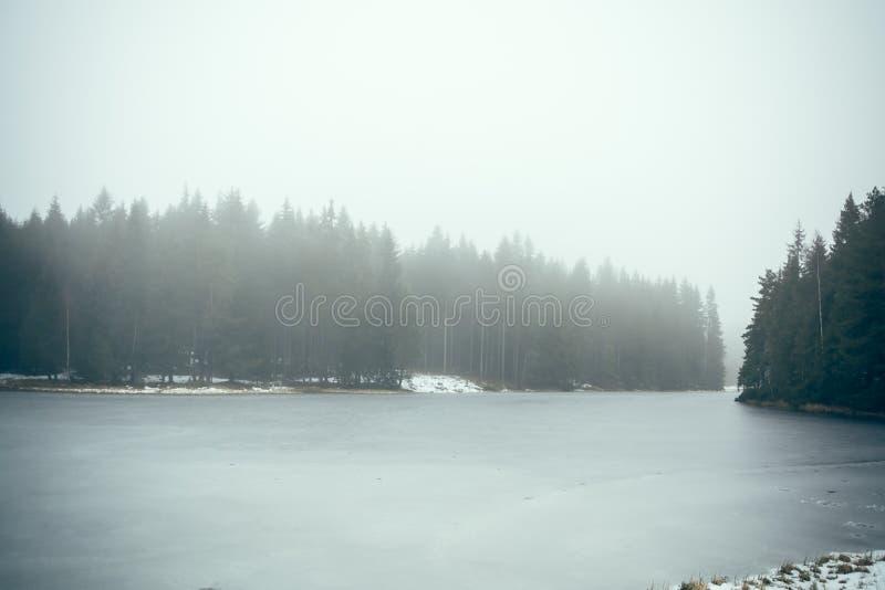 Озеро лес в тумане II стоковая фотография rf